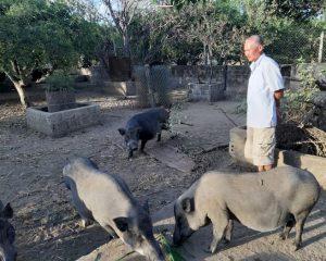 Nằm mơ thấy lợn rừng đen
